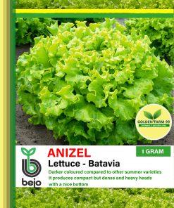 Anizel lettuce