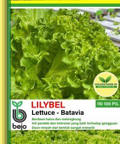 lilybel lettuce