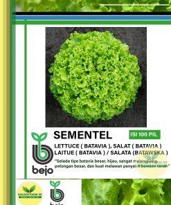 sementel lettuce